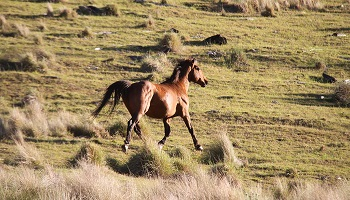 350x200_Spicers-Peak-Lodge-horse.jpg